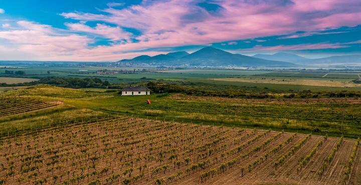 Виноградники в Сербии
