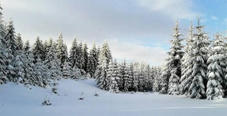Зимний лес в Чехии