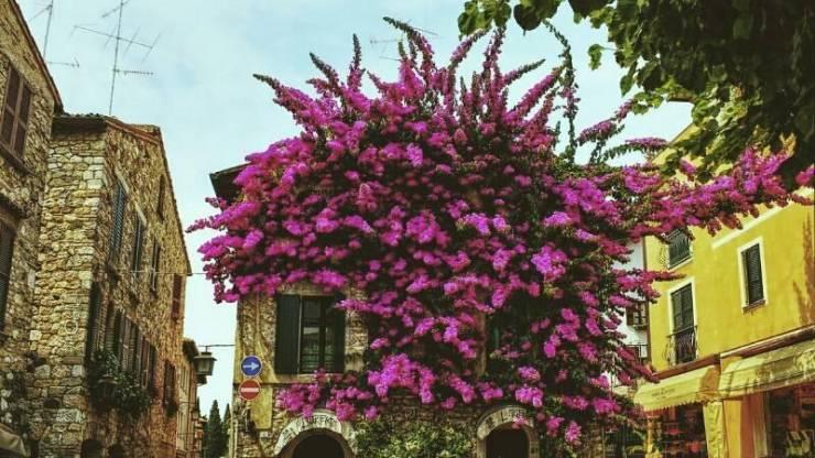 Цветущие улочки Сирмионе
