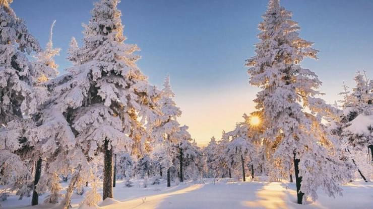 Зимний лес (Германия)